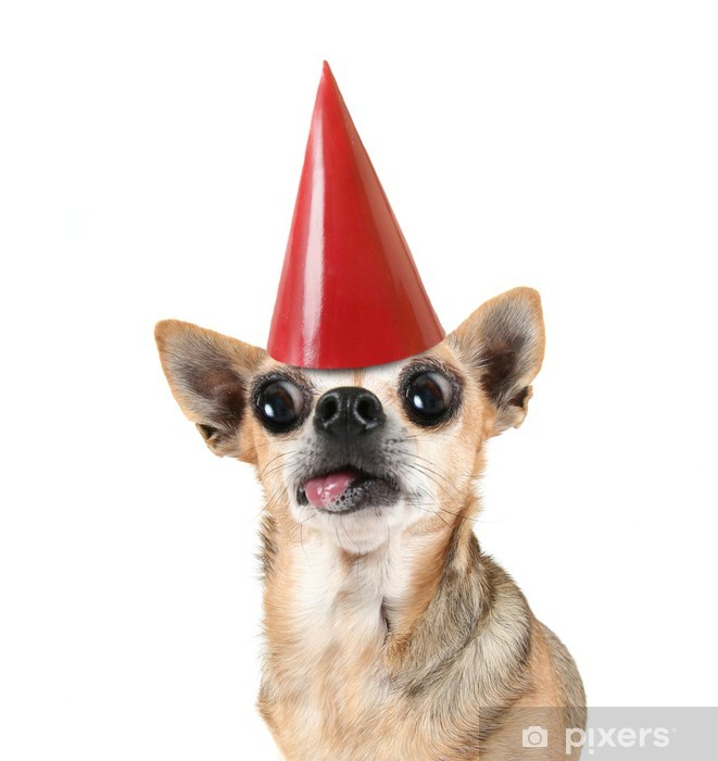 A Chihuahua With Red Birthday Hat On Pixerstick Sticker