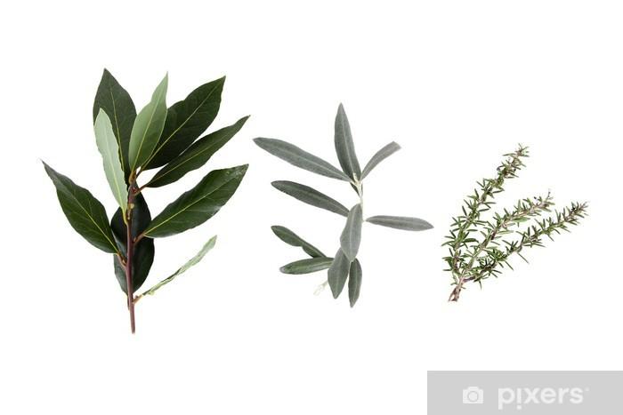 Vinyl-Fototapete Detail der Heilpflanze in Nahaufnahme auf weißem Hintergrund - Gewürze und Kräuter