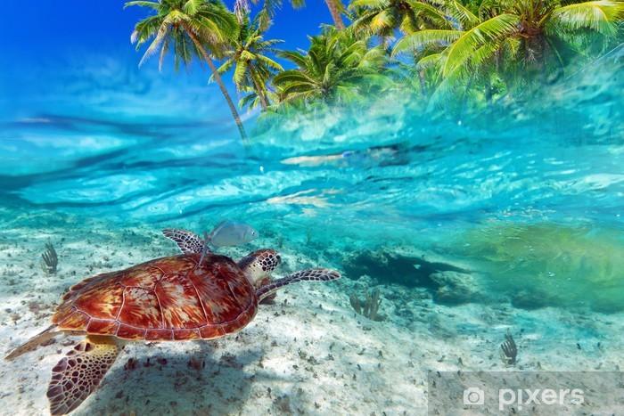 Papier peint vinyle Vert natation de tortue à l'île tropicale de la mer des Caraïbes - Eau