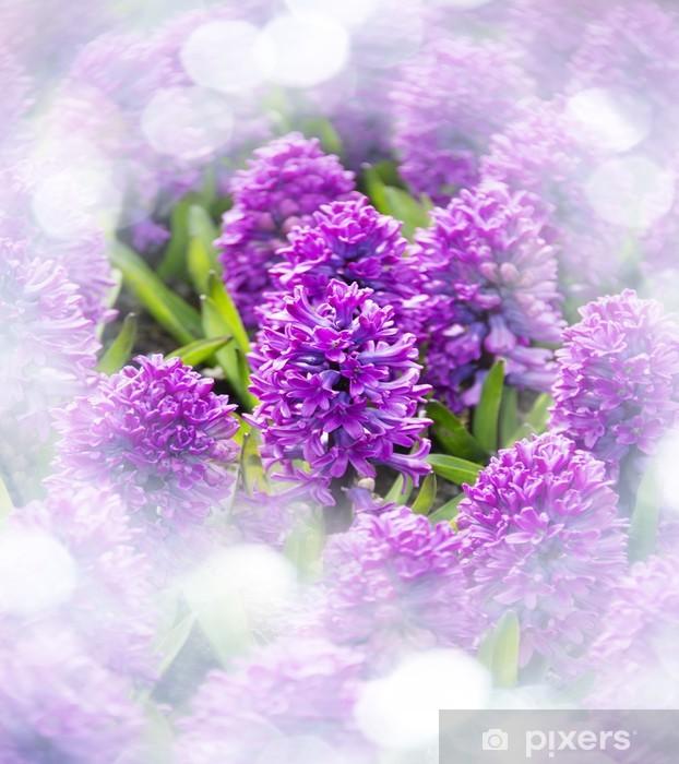 Afwasbaar Fotobehang Paarse hyacinten in de tuin - Bloemen