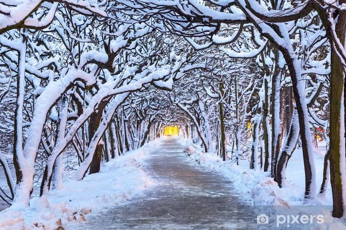 Fototapeta winylowa Zimowe krajobrazy w snowy park w Gdańsku, Polska - Tematy