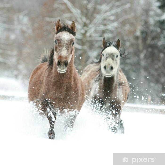 Vinylová fototapeta Dva arabští koně běží spolu ve sněhu - Vinylová fototapeta