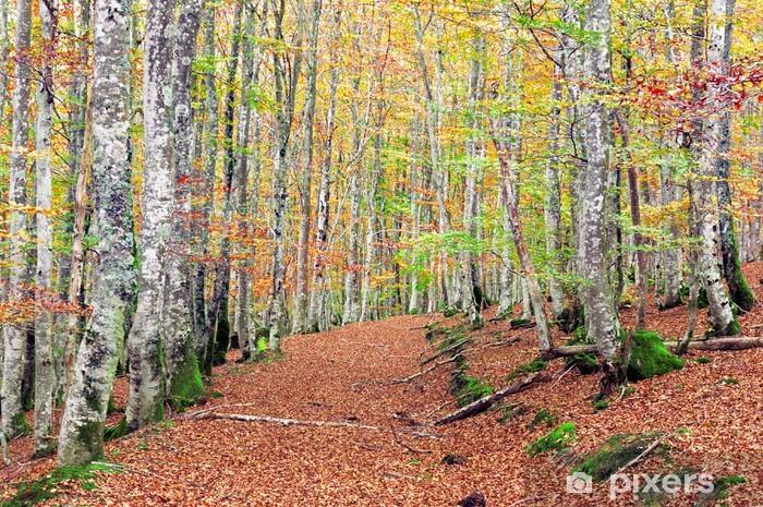 Vinyl Fotobehang Beukenbos met levendige kleuren en trail - Bomen