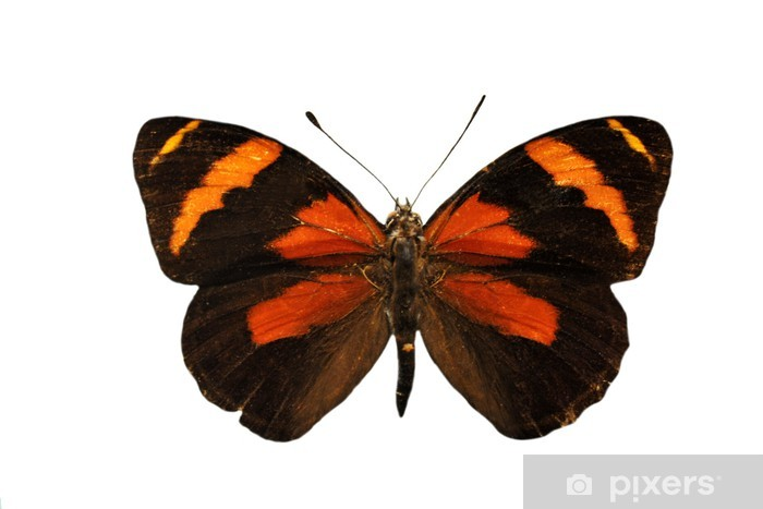 Vinylová fototapeta Barevné Butterfly - Vinylová fototapeta