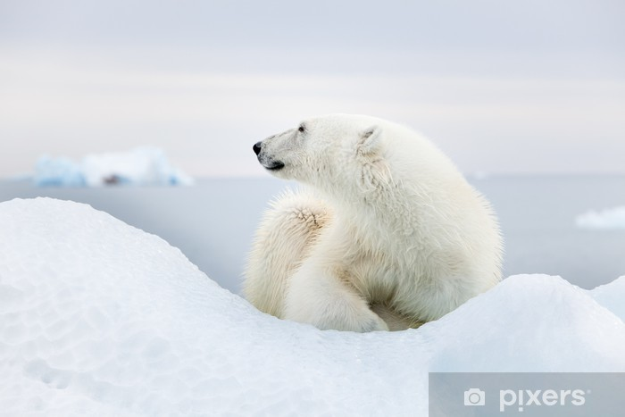 Sticker Pixerstick Ours polaire à Svalbard - Thèmes