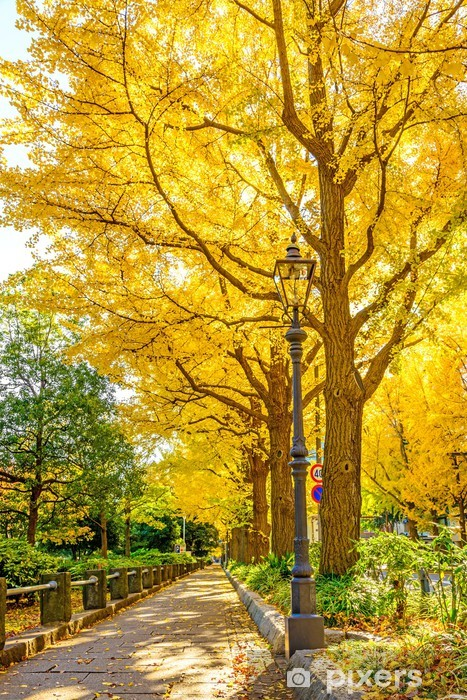 Fototapeta winylowa Ulica Gingko drzewa w Yamashita Park, Yokohama, Japonia - Pory roku