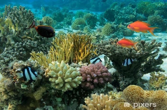 Fototapeta samoprzylepna Tropikalne ryby i rafa koralowa - Rafa koralowa