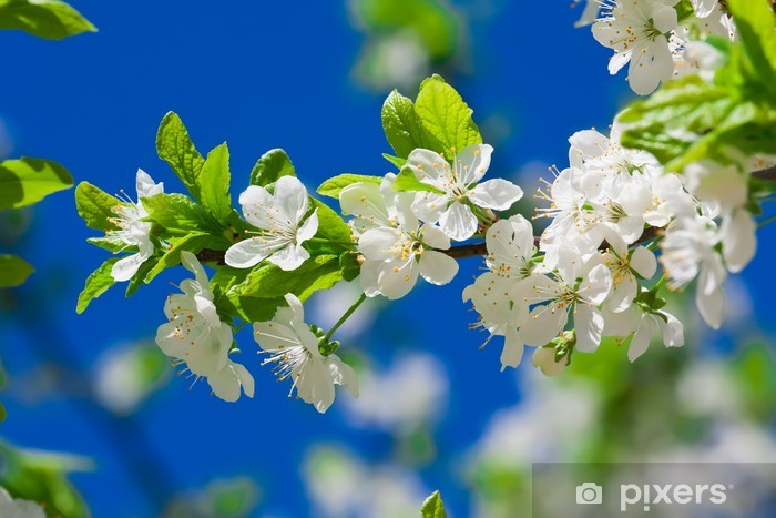 Vinilo Pixerstick Manzana flores - Manzanos