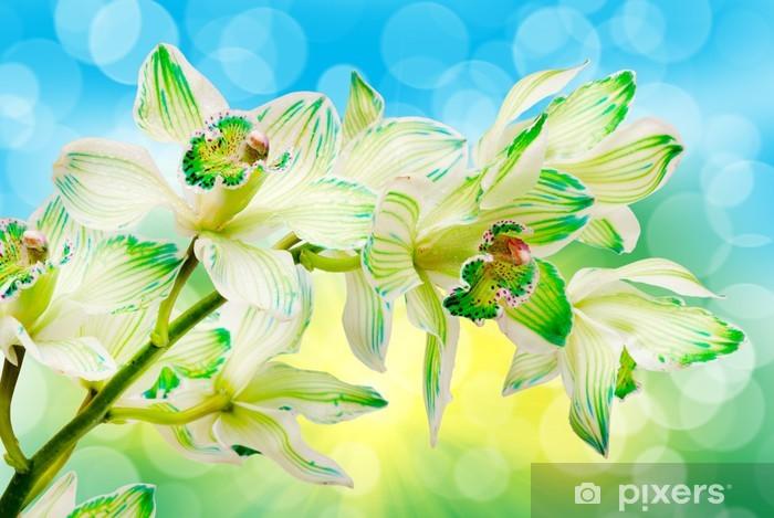 Vinyl-Fototapete Nahaufnahme der Orchideenblüte - Blumen