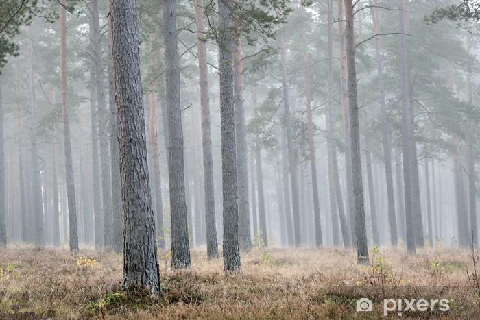 Pixerstick Sticker Sterke ochtend mist in het bos - Bomen