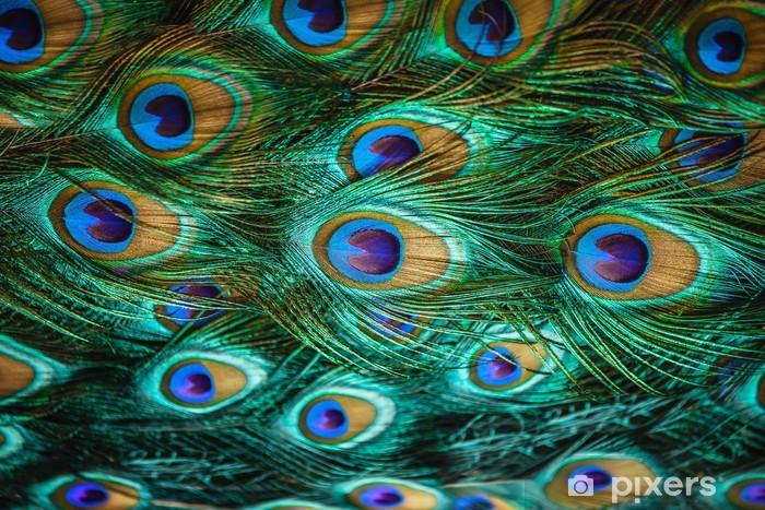 Fotomural Estándar Plumas de pavo real de colores, dof bajo - Temas