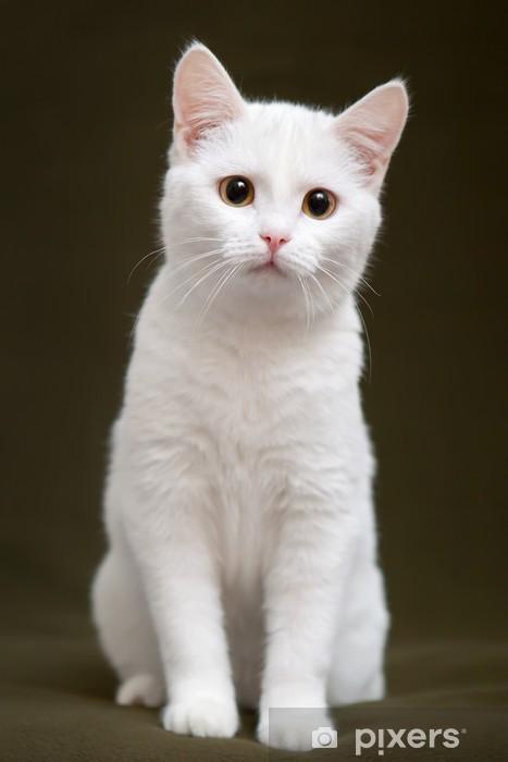 Vinilo para Nevera Hermoso gato blanco con ojos amarillos sentado en una manta -