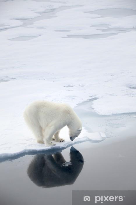 Sticker Pixerstick Ours polaire attente pour les phoques - Thèmes