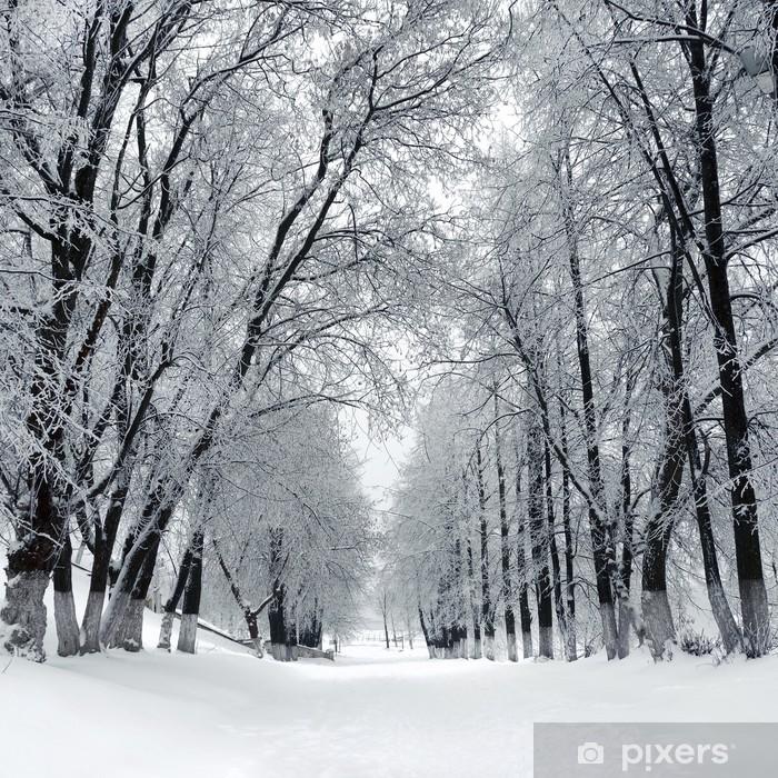 Fototapeta winylowa Winter Park, Krajobraz - Tematy
