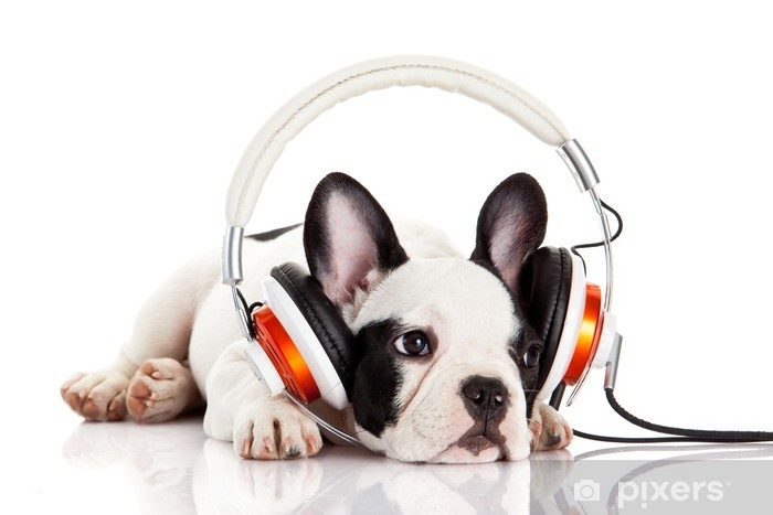 dog listening to music with headphones isolated on white backgro Pixerstick Sticker - Mammals