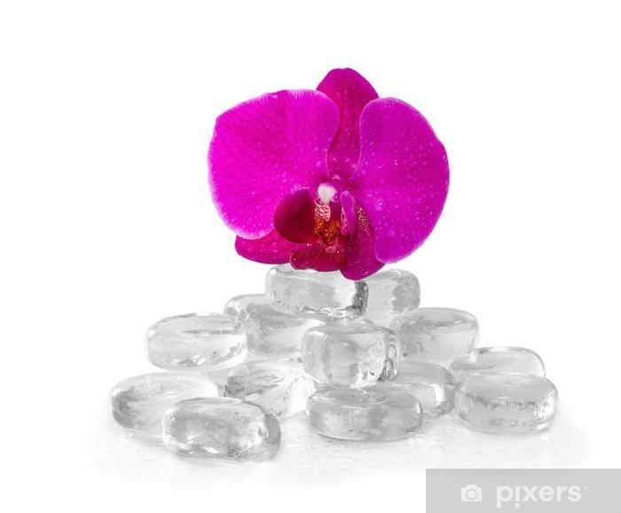 Naklejka Pixerstick Pink Orchidea z Rosy i refleksji - Kwiaty