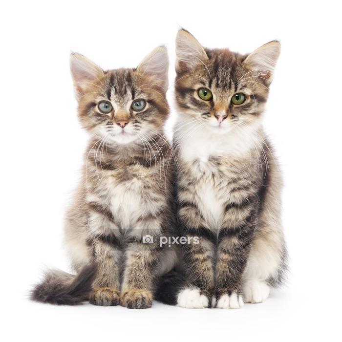 Muursticker Twee kleine kittens - Zoogdieren