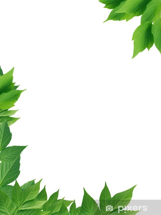 Green Leaves Border Wall Mural Pixers 174 We Live To Change