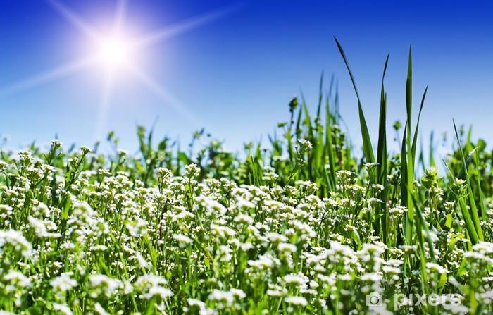 Fototapeta winylowa Zielonej łące i słońce - Krajobraz wiejski