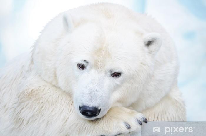 Fototapeta winylowa White Bear. - Tematy