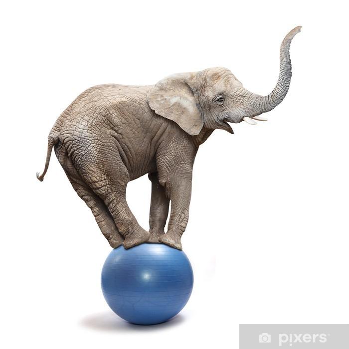 Vinilo para Nevera Elefante africano (Loxodonta africana) en equilibrio sobre una bola azul. - Vinilo para pared