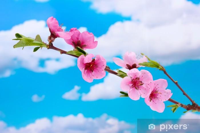 Adesivo Bella Rosa Fiori Di Pesco Su Sfondo Blu Cielo Pixers