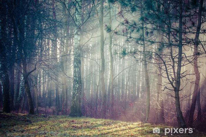 Pixerstick Sticker Weg en zonnestralen in sterke mist in het bos, Polen. - Thema's