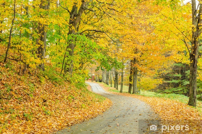 Bumpy Country Road and Autumn Colours Vinyl Wall Mural - Forests