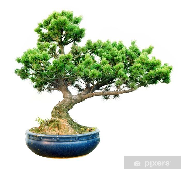 Plakat Bonsai - Drzewa