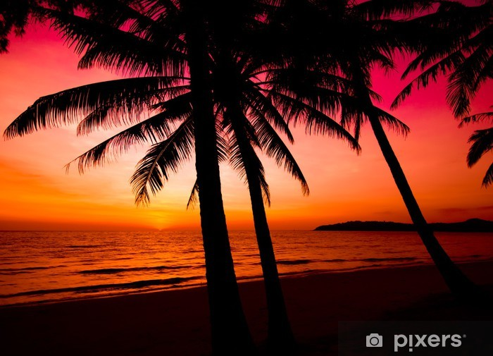 Palm Trees Silhouette On Sunset Tropical Beach Tropical