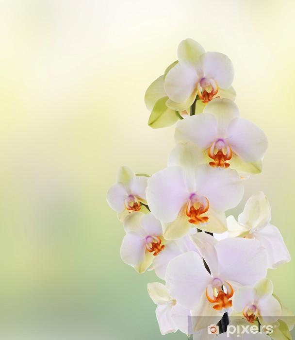 Sticker Pixerstick Belles fleurs Orchid.Beauty.Flora japonais - Thèmes