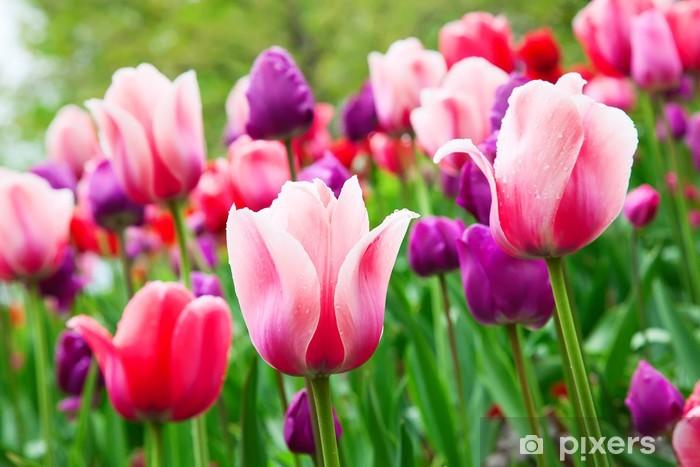 Vinilo Pixerstick Los tulipanes - Temas