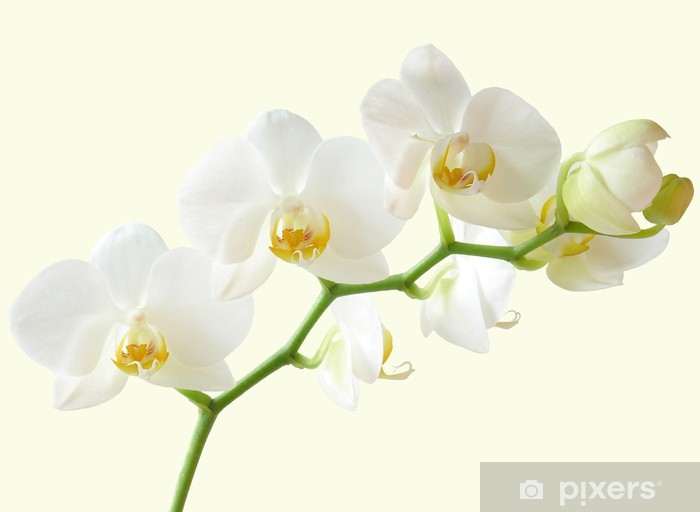 Mazzo Di Fiori Orchidee.Carta Da Parati Mazzo Di Fiori Di Orchidea Bianca E Gialla