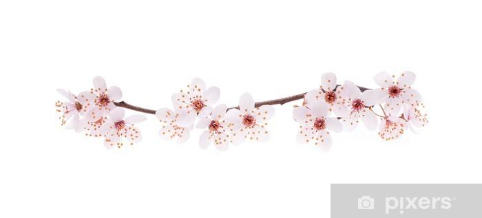 Papier Peint Direction Generale De Cerisier Japonais A La Fleur