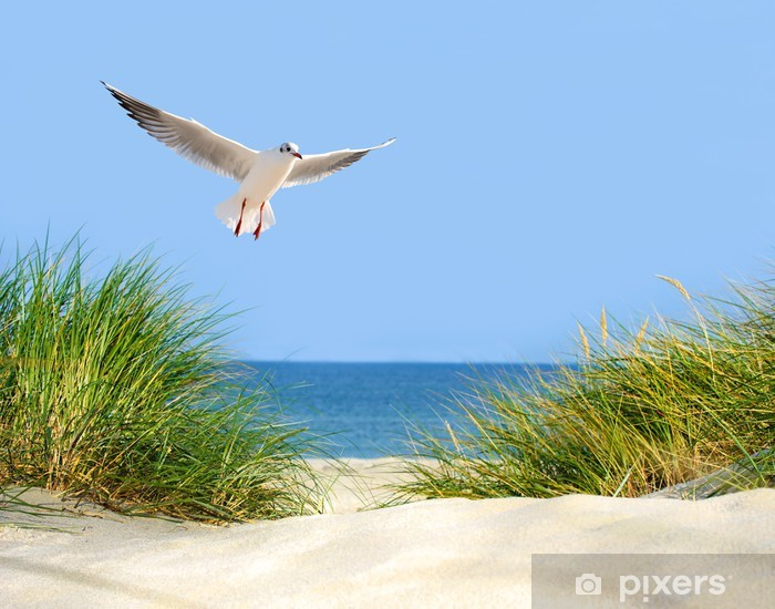 Fotomural Estándar Vistas Dune, gaviota y mar - Mar y océano