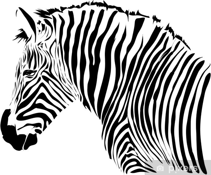 Nice head illustration of zebra isolated on white background Vinyl Wall Mural - Styles