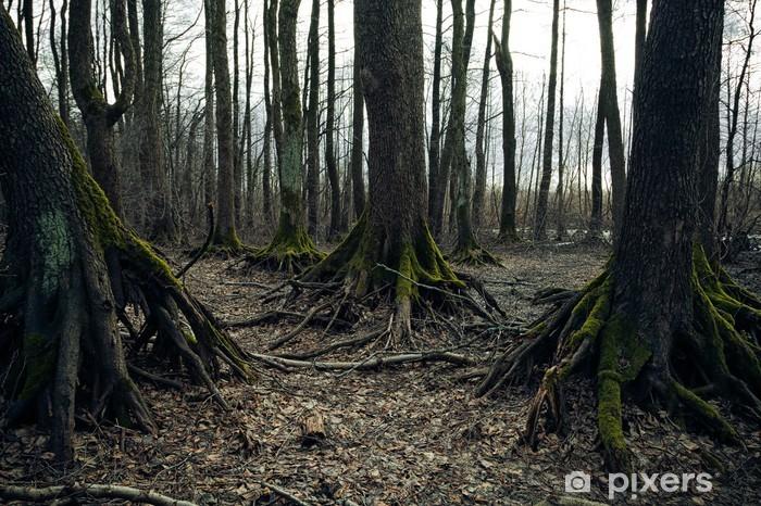 Fototapeta winylowa Dark forest - Święta międzynarodowe