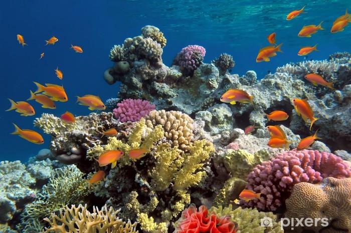 Pixerstick Sticker Onderwater schieten van levendige koraalrif met een vissen - Koraalrif