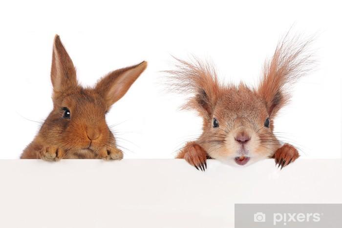 Fototapeta winylowa Wiewiórka i dwa króliki - Ssaki