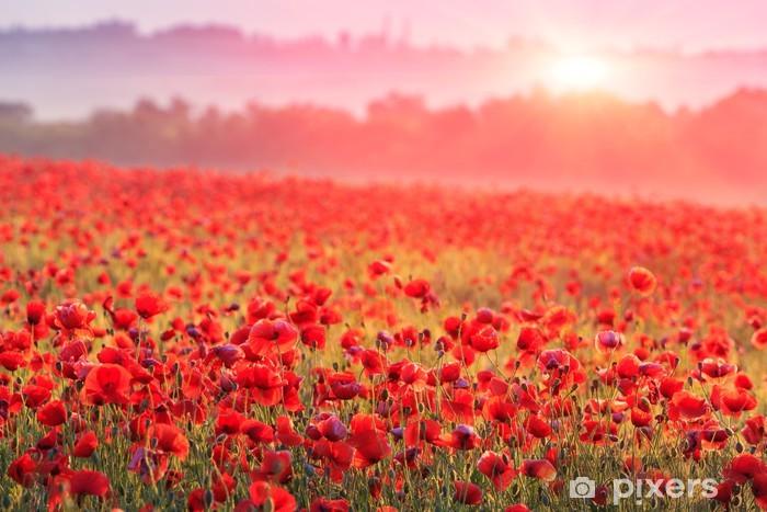 Vinyl Fotobehang Een veld vol rode klaprozen in de ochtendmist - Weiden, velden en gras