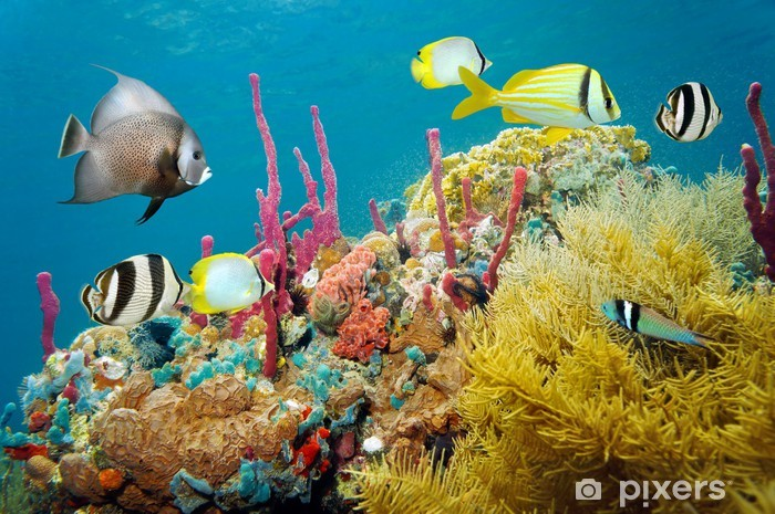Fototapeta winylowa Kolorowy podwodny życia morskiego w rafie koralowej - Przeznaczenia