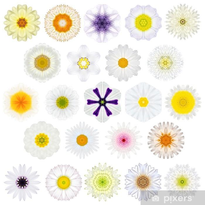 Poster Riesige Auswahl von verschiedenen Concentric Mandala-Blumen getrennt - Texturen