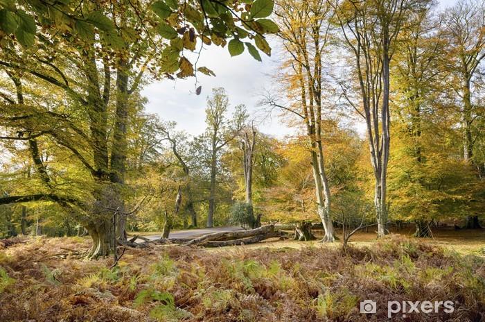 Nálepka Pixerstick Podzim v New Forest - Evropa