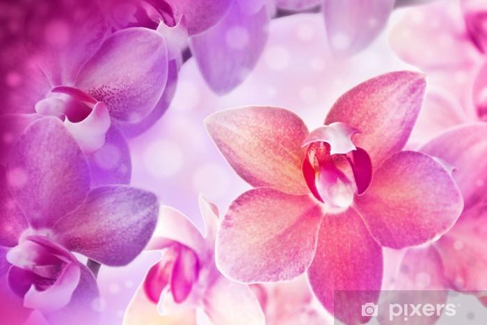 Vinylová fototapeta Orchideje - Vinylová fototapeta