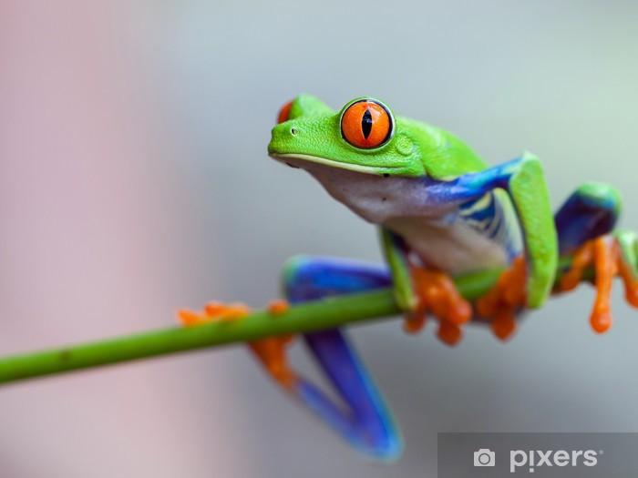 Fotomural Estándar Red eye frog - Ranas