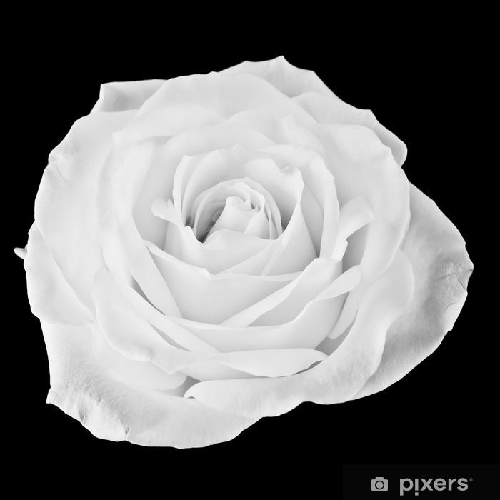 Fototapeta winylowa Czarna i biała róża - Tematy