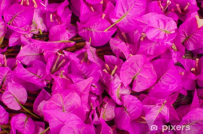 Fototapeta winylowa Kwiaty Bougainvillea - Tła