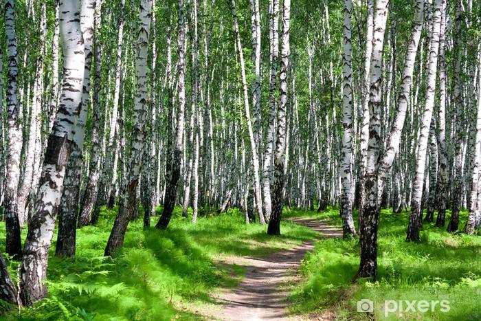 Papier peint vinyle Chemin dans une forêt de bouleaux - Destin