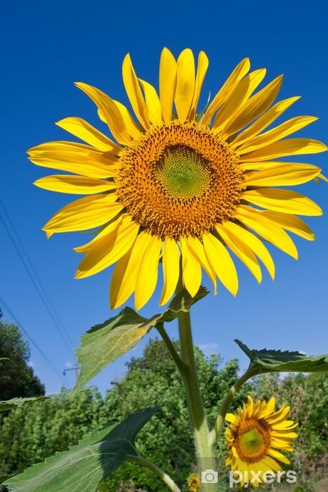 Sunflower Vinyl Wall Mural - Flowers