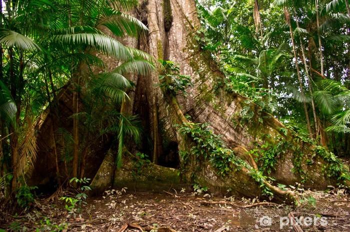Fototapeta winylowa Amazon Junge - Brazylia
